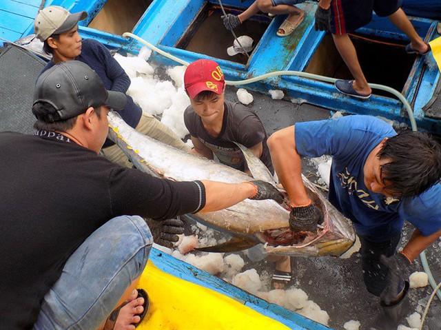 Thẻ vàng IUU làm giảm tăng trưởng xuất khẩu hải sản - Ảnh 1.