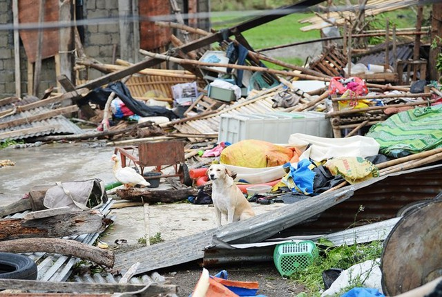 Số người chết vì bão Mangkhut ở Philippines tăng chóng mặt - Ảnh 6.