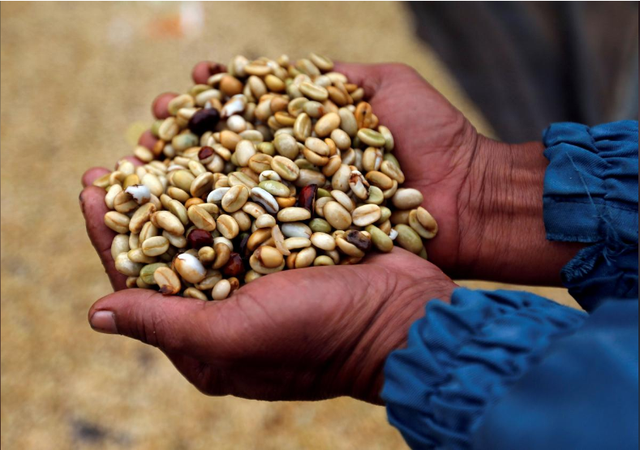Ngành cà phê thế giới họp khẩn vì giá xuống thấp kỷ lục - Ảnh 1.