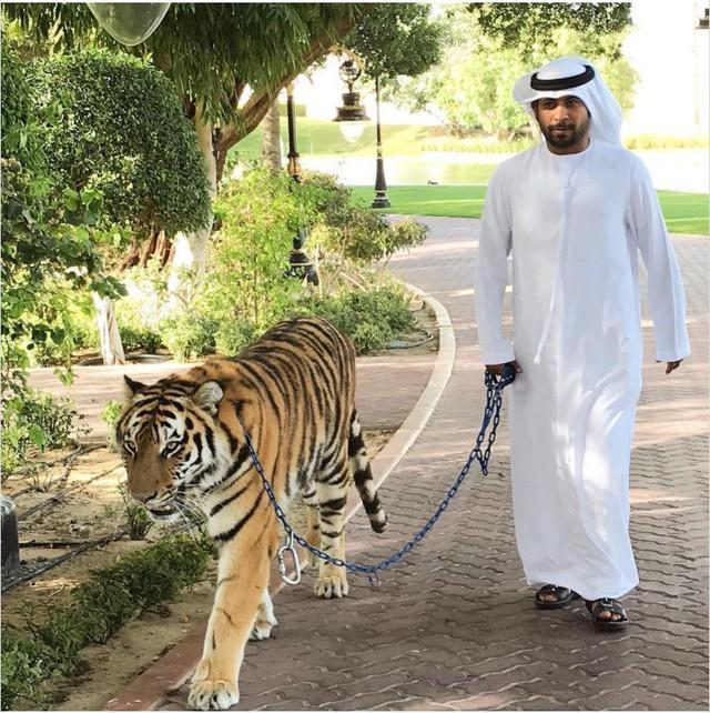 9 sự thật không thể đỡ được khiến bạn phải ngã ngửa khi nhắc đến Dubai - Ảnh 6.