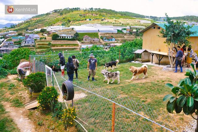 Rời bỏ phố thị, cô gái Sài Gòn lên Đà Lạt cùng bạn trai xây dựng khu vườn giữa núi rừng hoang vu dành cho thú cưng - Ảnh 1.