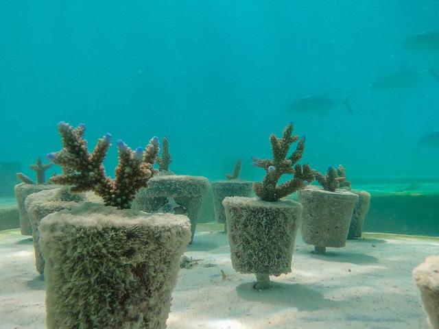 Khám phá phòng trưng bày nghệ thuật thủy triều độc đáo tại Maldives - thiên đường hạ giới ai cũng nên đến một lần trong đời - Ảnh 13.