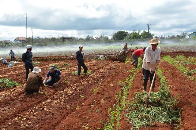 Đà Lạt công khai 17 cơ sở kinh doanh nông sản Trung Quốc - Ảnh 3.