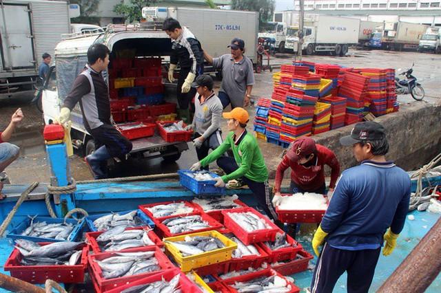 Chuyến biển đầu năm ngư dân Bình Định trúng đậm cá ngừ sọc dưa, có tàu thu tiền tỷ