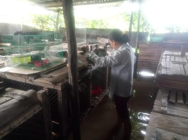 Đàn chồn hương của anh Long lên tới hơn 100 con, thu lãi 300 triệu đồng/năm