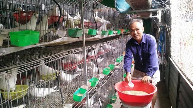 Ông Tuấn bên trang trại bồ câu của gia đình
