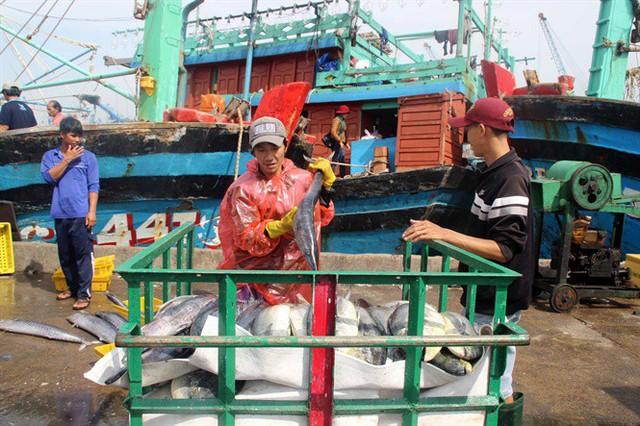 Cá ngừ sọc dưa được chất lên xe ba gác đưa đi tiêu thụ