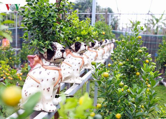 Những cây quất sai trĩu quả trên thân những chú chó đốm xinh xắn khiến khách vô cùng thích thú. Được biết những chú chó trên có xuất xứ từ gốm Bát Tràng được đặt riêng để phục vụ tết Mậu Tuất năm nay. (Ảnh VOV).