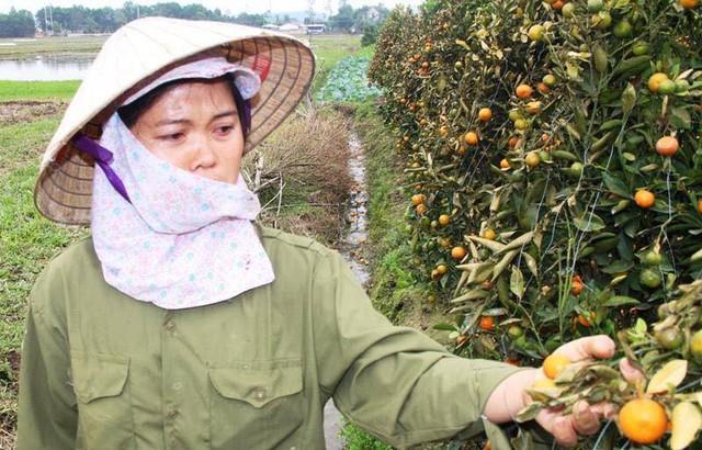 Hình ảnh người nông dân khóc nghẹn bên 450 gốc quất bị phá hoại dịp cận Tết khiến cộng đồng mạng xót xa - Ảnh 1.