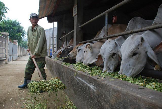 Choáng với con số gần nửa tỷ USD nhập thịt trâu, bò! - Ảnh 1.