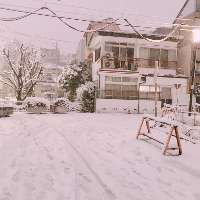 Những hình ảnh rùng mình trong bão tuyết kỷ lục tại Tokyo: Hàng trăm chuyến bay bị hủy, xe đạp đóng băng ngoài trời - Ảnh 1.