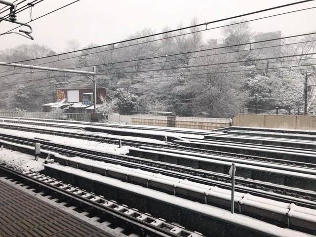 Những hình ảnh rùng mình trong bão tuyết kỷ lục tại Tokyo: Hàng trăm chuyến bay bị hủy, xe đạp đóng băng ngoài trời - Ảnh 14.