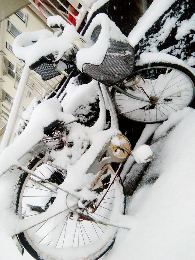 Những hình ảnh rùng mình trong bão tuyết kỷ lục tại Tokyo: Hàng trăm chuyến bay bị hủy, xe đạp đóng băng ngoài trời - Ảnh 15.