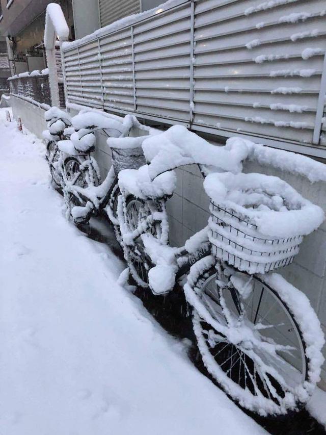 Những hình ảnh rùng mình trong bão tuyết kỷ lục tại Tokyo: Hàng trăm chuyến bay bị hủy, xe đạp đóng băng ngoài trời - Ảnh 3.