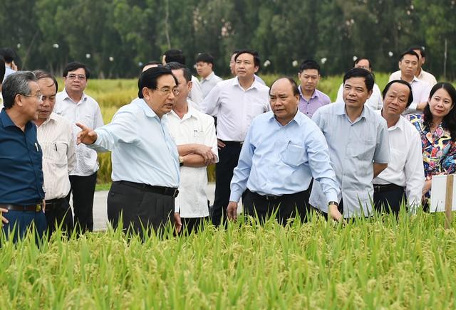 Thủ tướng Nguyễn Xuân Phúc thăm cánh đồng mẫu, trồng các giống lúa mới của Trung tâm Nghiên cứu nông nghiệp Định Thành, Tập đoàn Lộc Trời tại An Giang (ngày 14/3/2017). Ảnh: VGP/Quang Hiếu