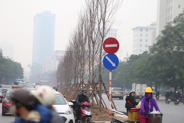 Cận cảnh cây phong lá đỏ mới được trồng trên đường phố Hà Nội - Ảnh 4.