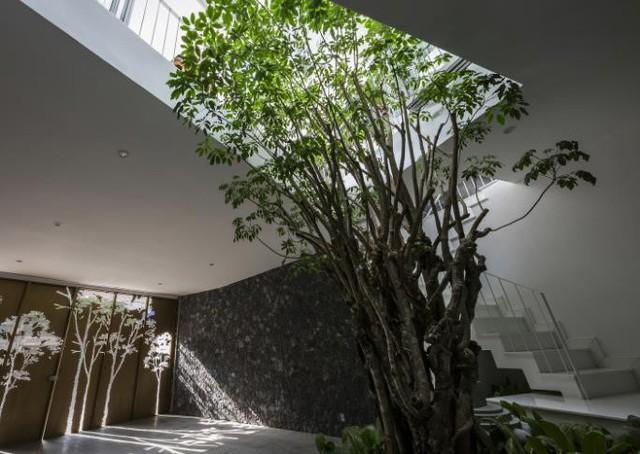 Nhà phố ở Nha Trang gây sốt với thiết kế xanh mướt nhờ những miệt vườn nhỏ - Ảnh 4.