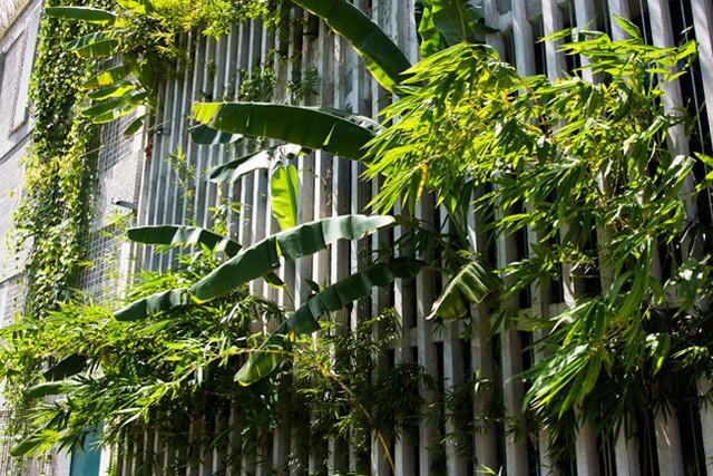 Hàng vạn dân văn phòng sẽ mơ ước được làm việc trong resort ngập cây xanh này - Ảnh 5.