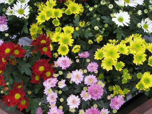 Những loại hoa gia đình nào cũng nên trưng trong ngày Tết để rước thêm may mắn và tài lộc vào nhà - Ảnh 4.