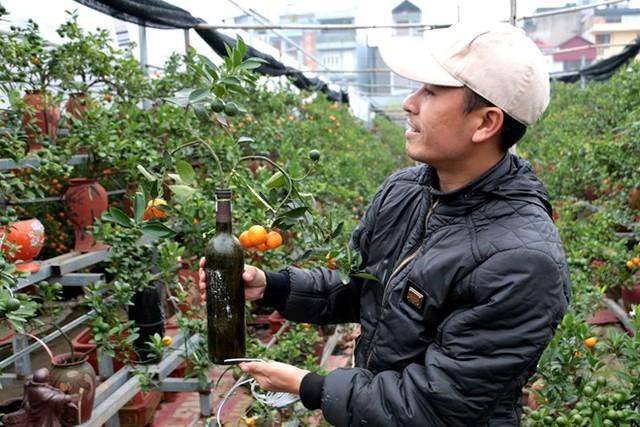 Việc trồng quất trong bình, lọ…đã trở nên quen thuộc với khách, tuy nhiên trồng quất trong chai thủy tinh như thế này lại rất mới lạ và độc đáo. (Ảnh cand.com.vn).