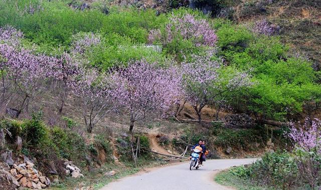 Nếu không ăn Tết ở nhà, đây là 10 điểm du lịch hấp dẫn nhất ở Việt Nam năm 2018 bạn không nên bỏ qua - Ảnh 5.