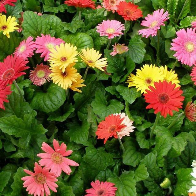 Những loại hoa gia đình nào cũng nên trưng trong ngày Tết để rước thêm may mắn và tài lộc vào nhà - Ảnh 5.