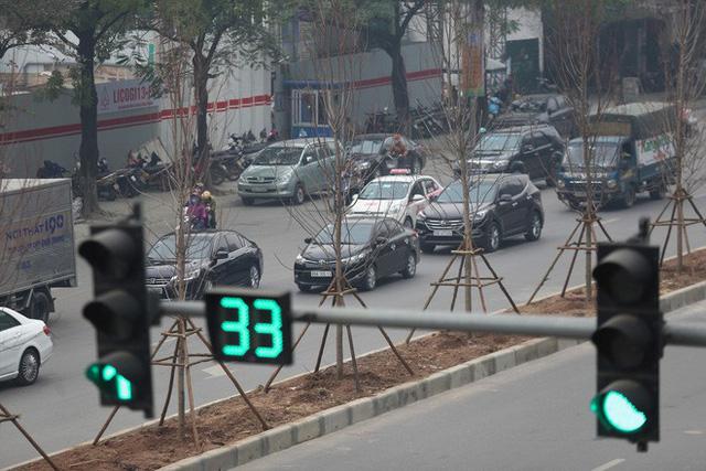 Cận cảnh cây phong lá đỏ mới được trồng trên đường phố Hà Nội - Ảnh 7.