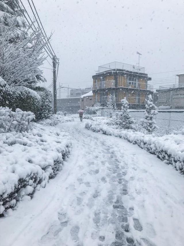 Những hình ảnh rùng mình trong bão tuyết kỷ lục tại Tokyo: Hàng trăm chuyến bay bị hủy, xe đạp đóng băng ngoài trời - Ảnh 7.