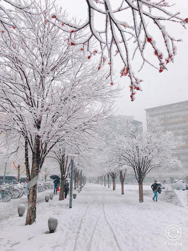 Những hình ảnh rùng mình trong bão tuyết kỷ lục tại Tokyo: Hàng trăm chuyến bay bị hủy, xe đạp đóng băng ngoài trời - Ảnh 8.