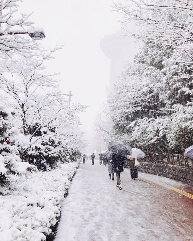 Những hình ảnh rùng mình trong bão tuyết kỷ lục tại Tokyo: Hàng trăm chuyến bay bị hủy, xe đạp đóng băng ngoài trời - Ảnh 9.