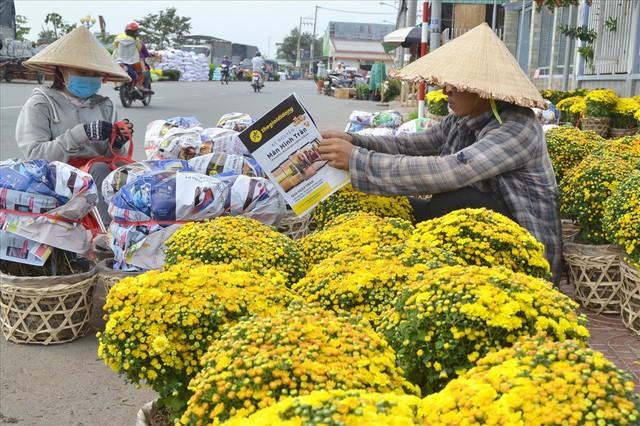 Làng hoa Sa Đéc: Thời tiết bất thường, trên 70% hoa cúc trổ sớm - Ảnh 10.