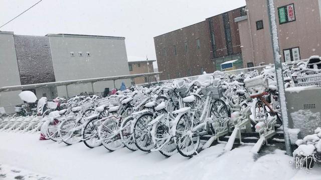 Những hình ảnh rùng mình trong bão tuyết kỷ lục tại Tokyo: Hàng trăm chuyến bay bị hủy, xe đạp đóng băng ngoài trời - Ảnh 10.