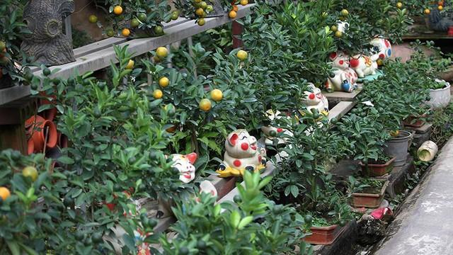 Lợn đất cõng quất bonsai giá bạc triệu chơi Tết ở Hà Nội - Ảnh 1.