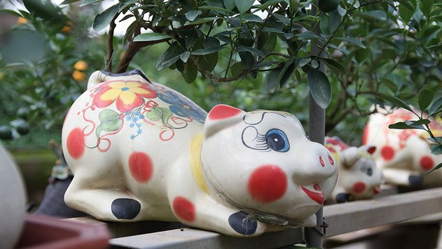 Lợn đất cõng quất bonsai giá bạc triệu chơi Tết ở Hà Nội - Ảnh 2.