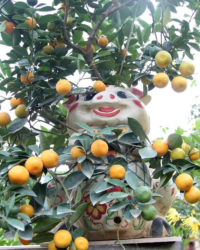 Lợn đất cõng quất bonsai giá bạc triệu chơi Tết ở Hà Nội - Ảnh 3.