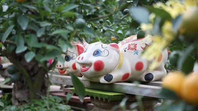 Lợn đất cõng quất bonsai giá bạc triệu chơi Tết ở Hà Nội - Ảnh 4.