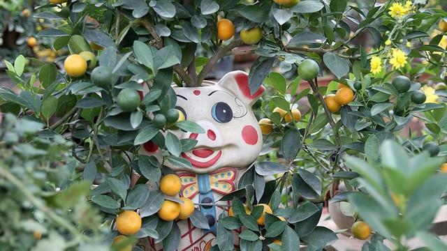 Lợn đất cõng quất bonsai giá bạc triệu chơi Tết ở Hà Nội - Ảnh 5.