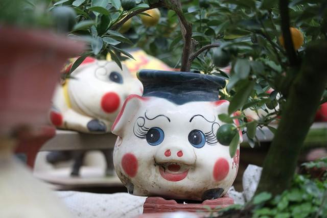 Lợn đất cõng quất bonsai giá bạc triệu chơi Tết ở Hà Nội - Ảnh 6.