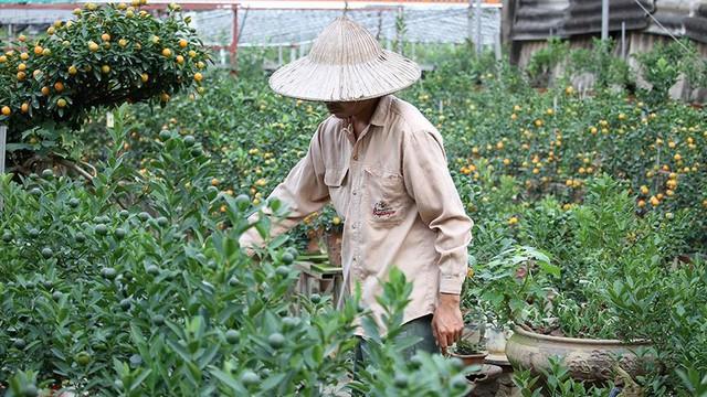 Lợn đất cõng quất bonsai giá bạc triệu chơi Tết ở Hà Nội - Ảnh 7.