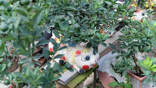 Lợn đất cõng quất bonsai giá bạc triệu chơi Tết ở Hà Nội - Ảnh 8.