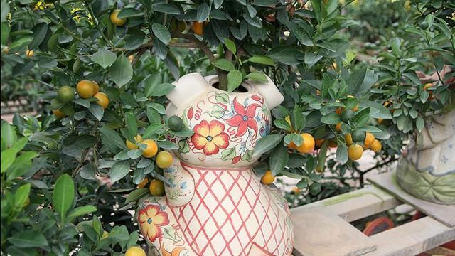 Lợn đất cõng quất bonsai giá bạc triệu chơi Tết ở Hà Nội - Ảnh 9.