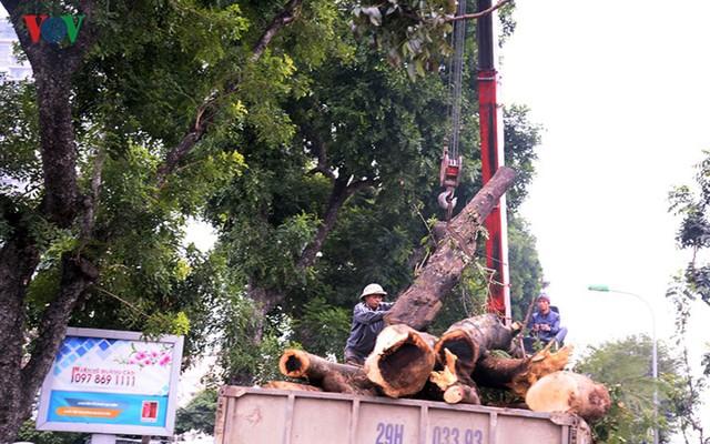 Ngày đêm chuyển cây, xén giải phân cách mở rộng vành đai 2, 3 ở Hà Nội - Ảnh 11.