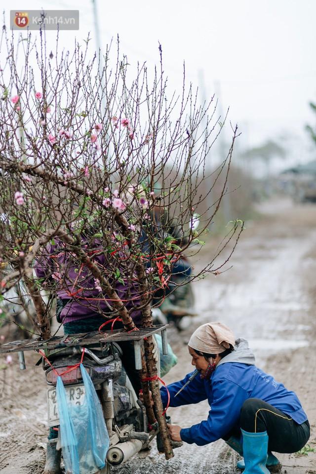 Chùm ảnh: Hoa đào đã nở đỏ rực trên những tuyến phố Hà Nội, Tết đã đến rất gần rồi! - Ảnh 15.
