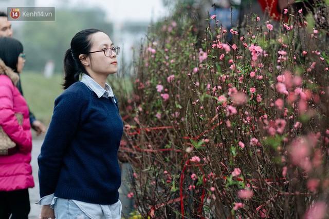 Chùm ảnh: Hoa đào đã nở đỏ rực trên những tuyến phố Hà Nội, Tết đã đến rất gần rồi! - Ảnh 17.