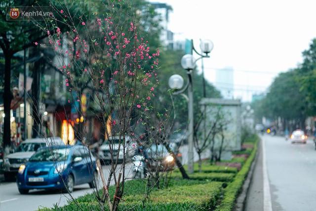 Chùm ảnh: Hoa đào đã nở đỏ rực trên những tuyến phố Hà Nội, Tết đã đến rất gần rồi! - Ảnh 4.