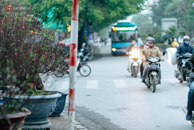 Chùm ảnh: Hoa đào đã nở đỏ rực trên những tuyến phố Hà Nội, Tết đã đến rất gần rồi! - Ảnh 5.