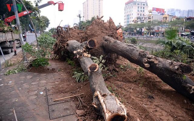 Ngày đêm chuyển cây, xén giải phân cách mở rộng vành đai 2, 3 ở Hà Nội - Ảnh 7.
