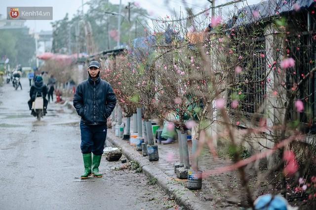 Chùm ảnh: Hoa đào đã nở đỏ rực trên những tuyến phố Hà Nội, Tết đã đến rất gần rồi! - Ảnh 9.