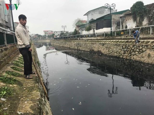 Ảnh: Kinh hoàng cá chết phủ kín cả con kênh giữa TP Vinh - Ảnh 8.