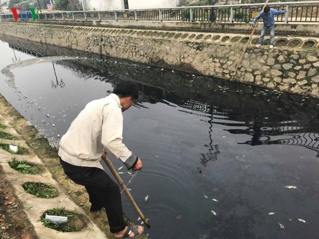 Ảnh: Kinh hoàng cá chết phủ kín cả con kênh giữa TP Vinh - Ảnh 10.